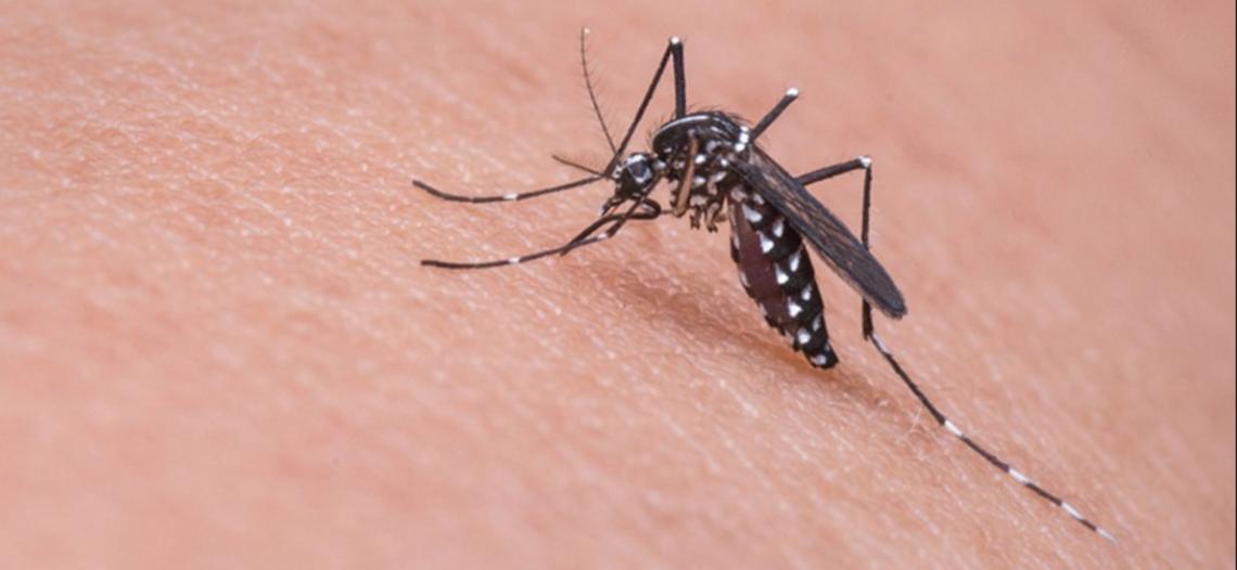 El combate contra el mosco es responsabilidad de todos