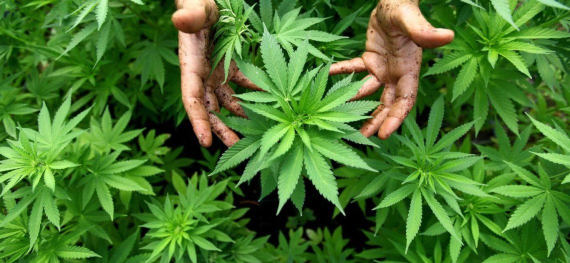 Entra en vigor ley en Nueva York que despenaliza mariguana