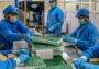 Repunte de contagios en India frena la producción de vacunas